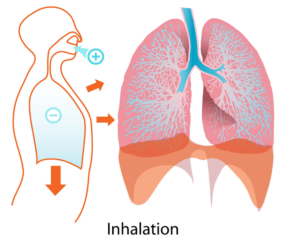 Breathing Techniques in Pilates - Inhalation